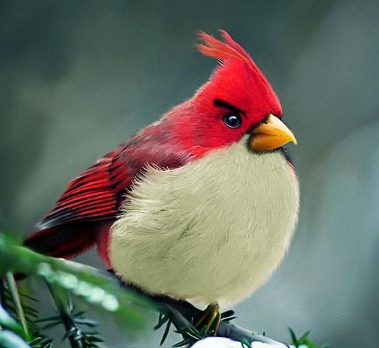 Злая птица, впервые обнаружена злым орнитологом.